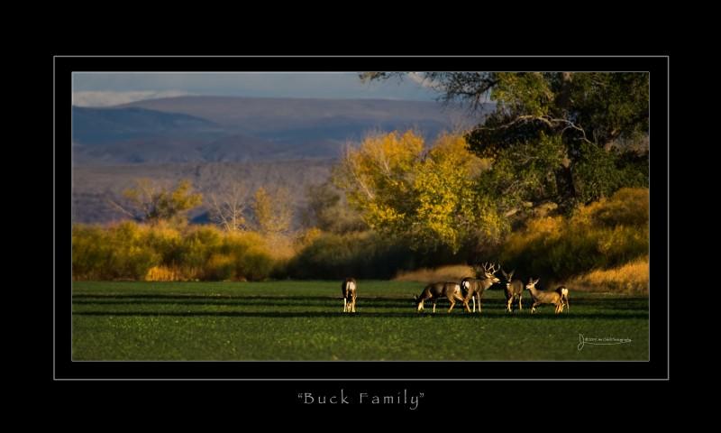 Buckfamily