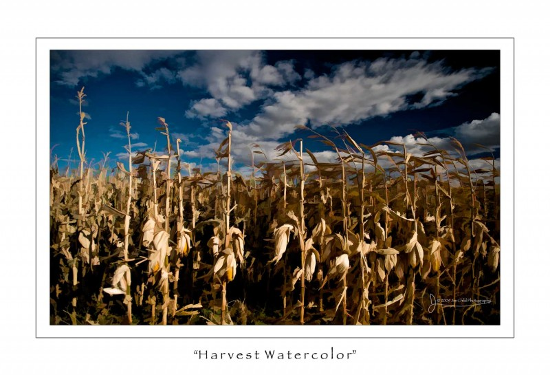 Harvestwatercolor