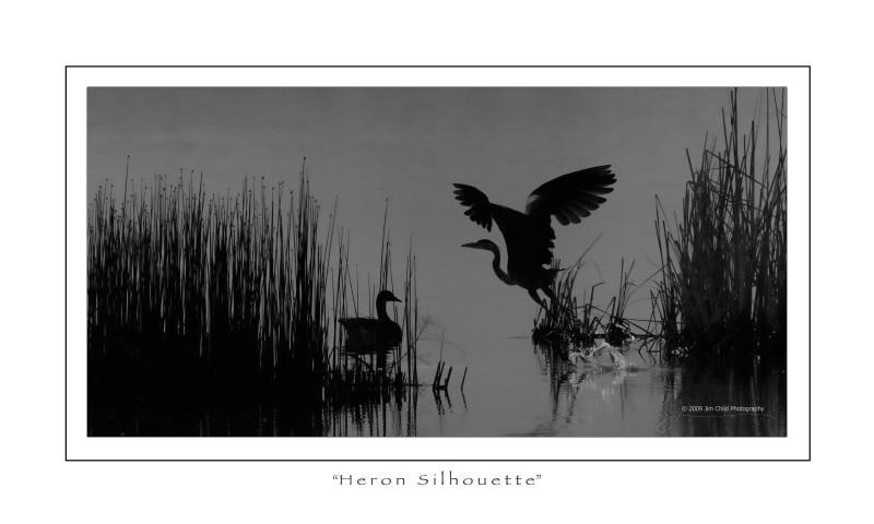 Heron silouette