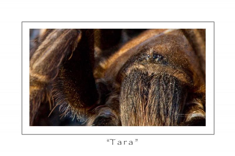 Tara3