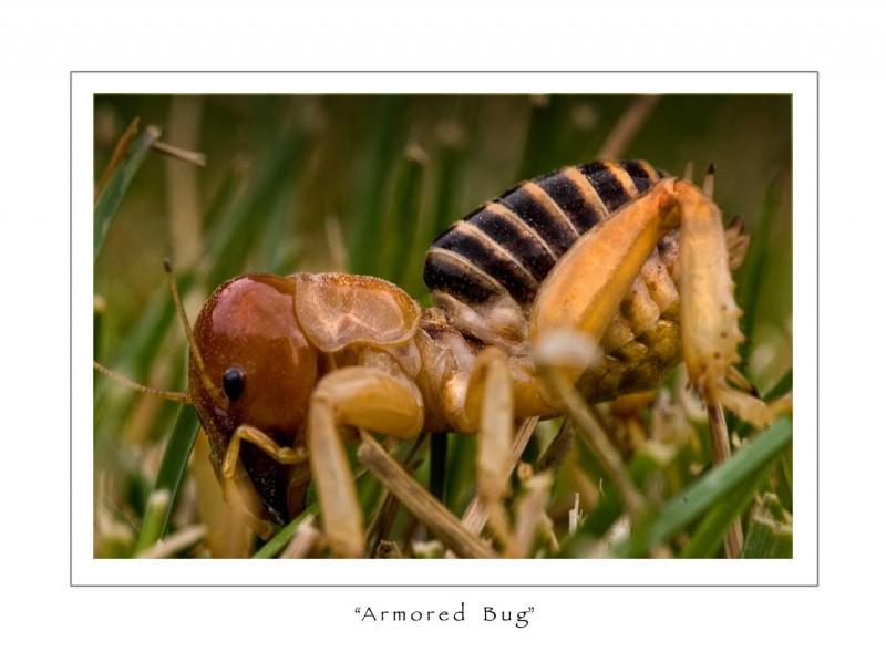 sandbugprofilesmall