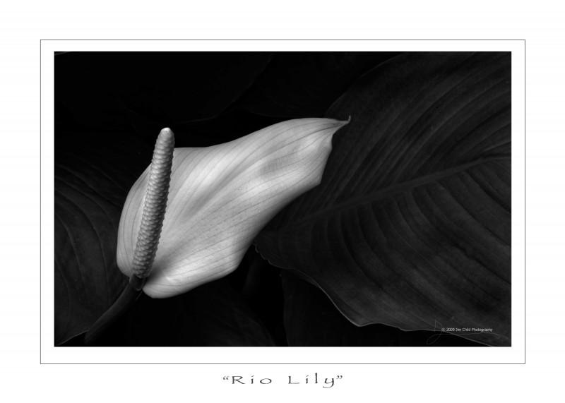 riolily