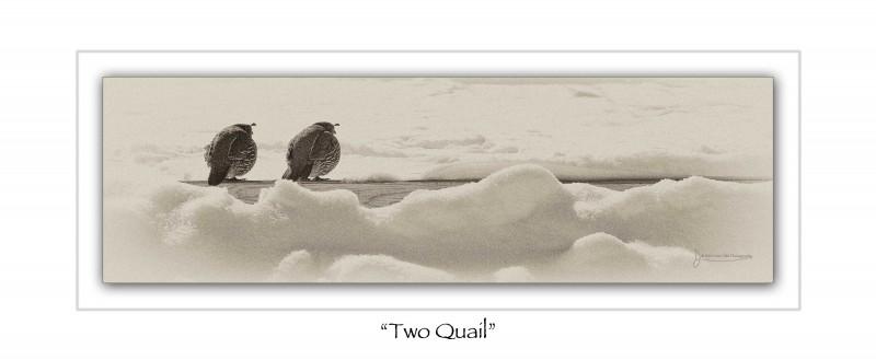 Two Quail