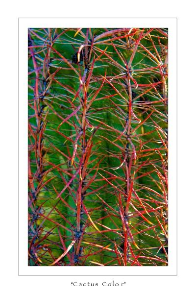 cactuscolor