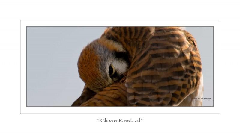 Close Kestral
