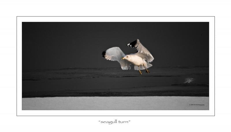 Seagulturn