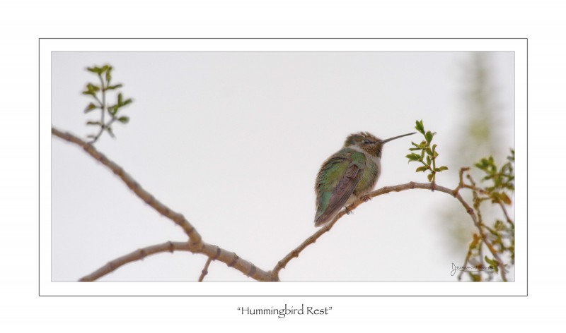 hummingbirdrest