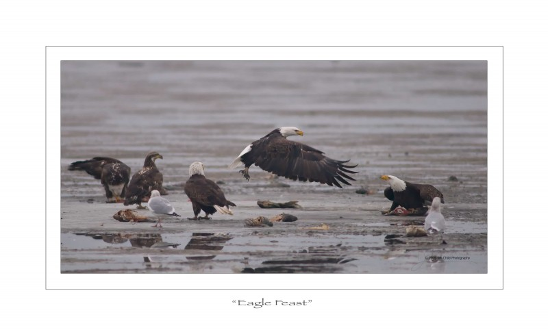 Eagle Feast