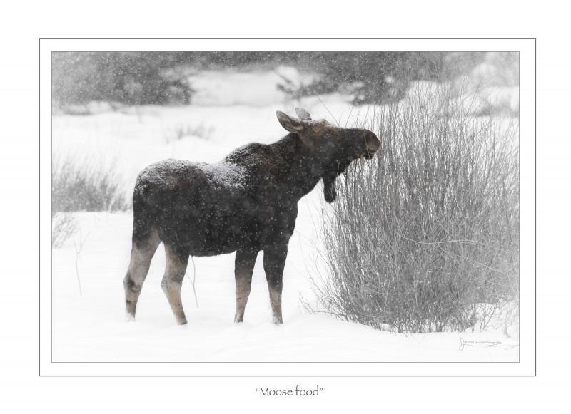 Moose Food