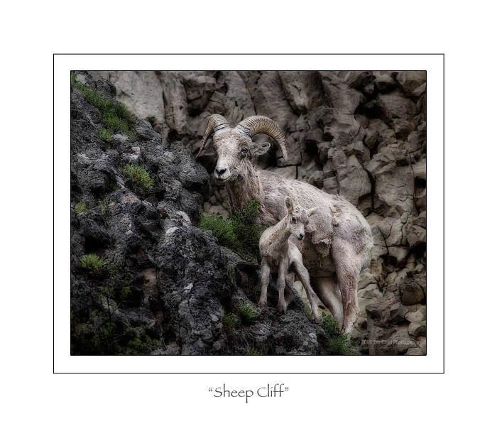 Sheep Cliff