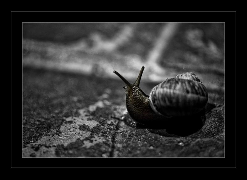 snailsmll