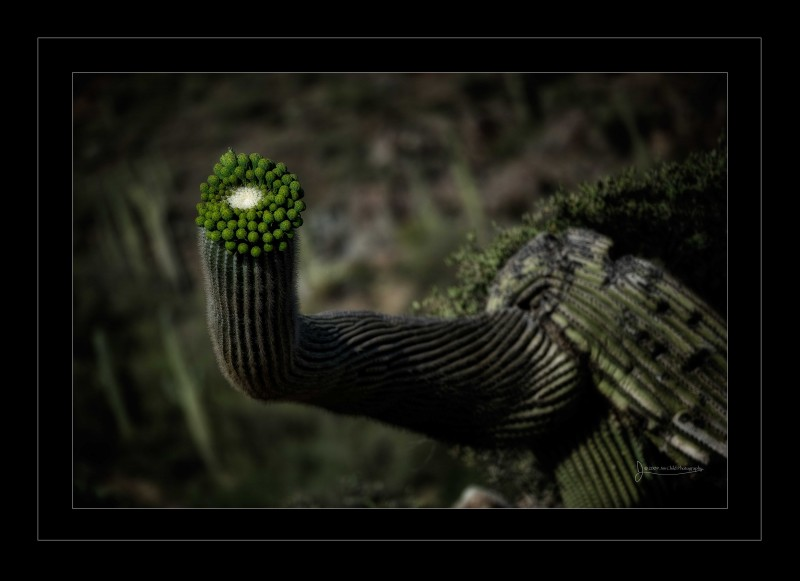 wierdcactus