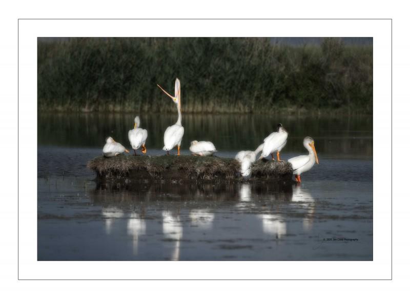 pelicanisland2