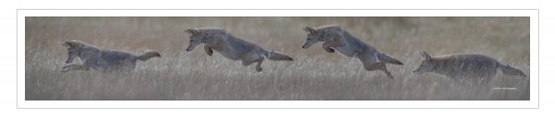 Coyote Jump Pano