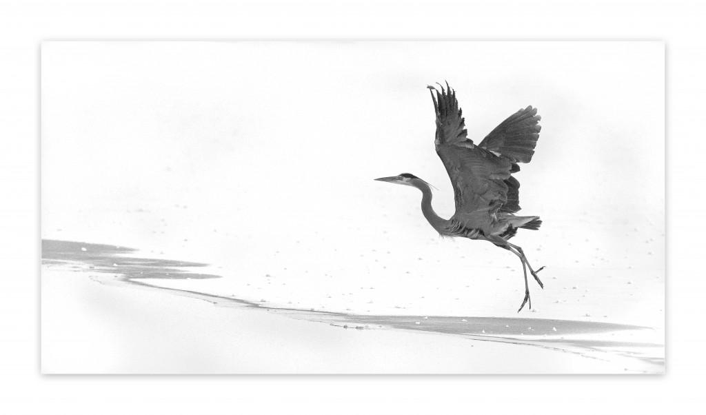 Heron fog
