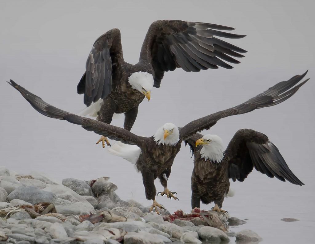 Eaglepileup