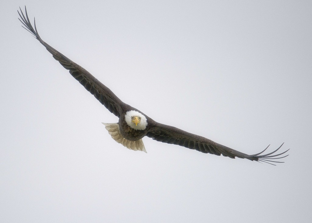 Eaglestraighton