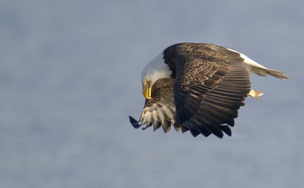 eaglefaceglow