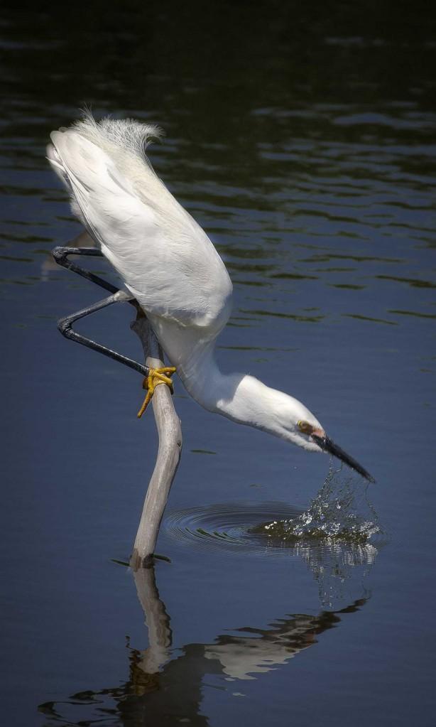 Egret Drink