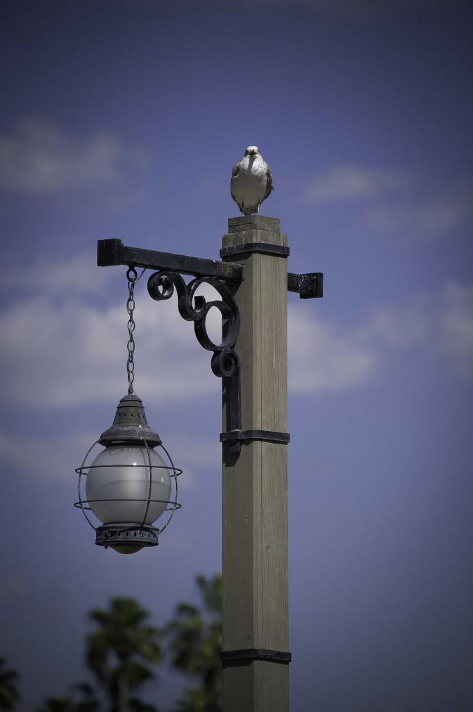 seagul on light