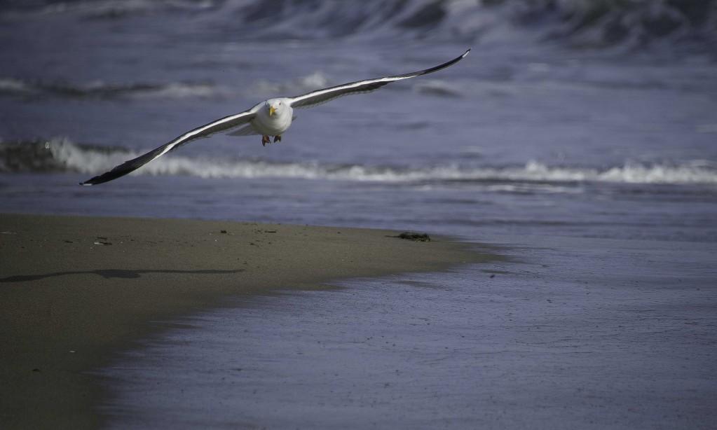 Seagullflyat cam