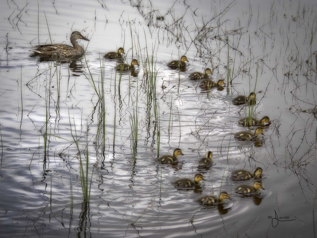 Duckcrew