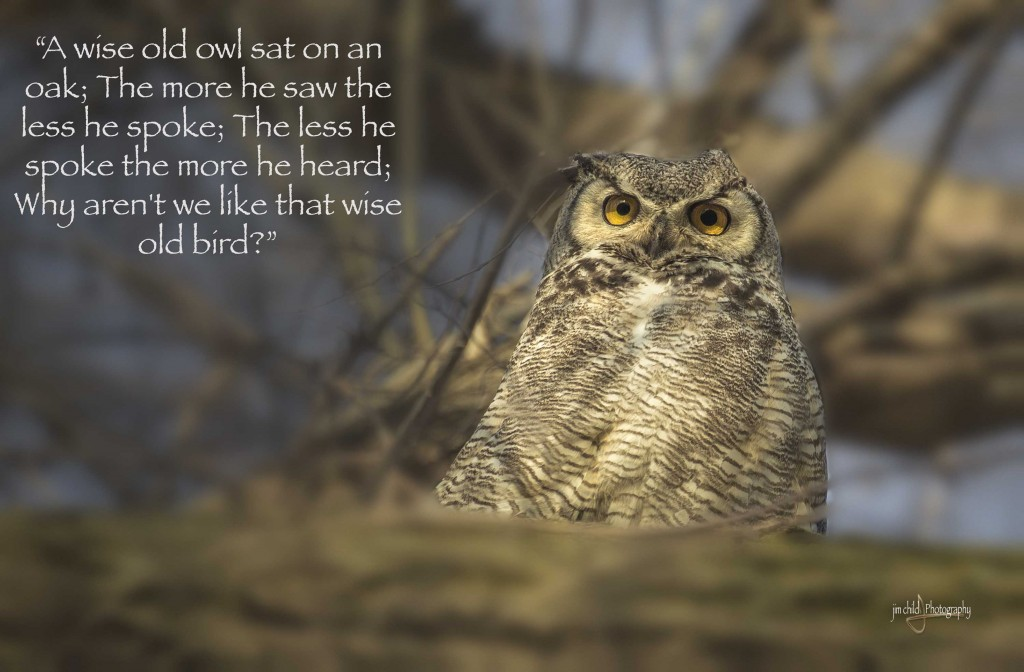 Wise Old Owl » Jim Child Photography